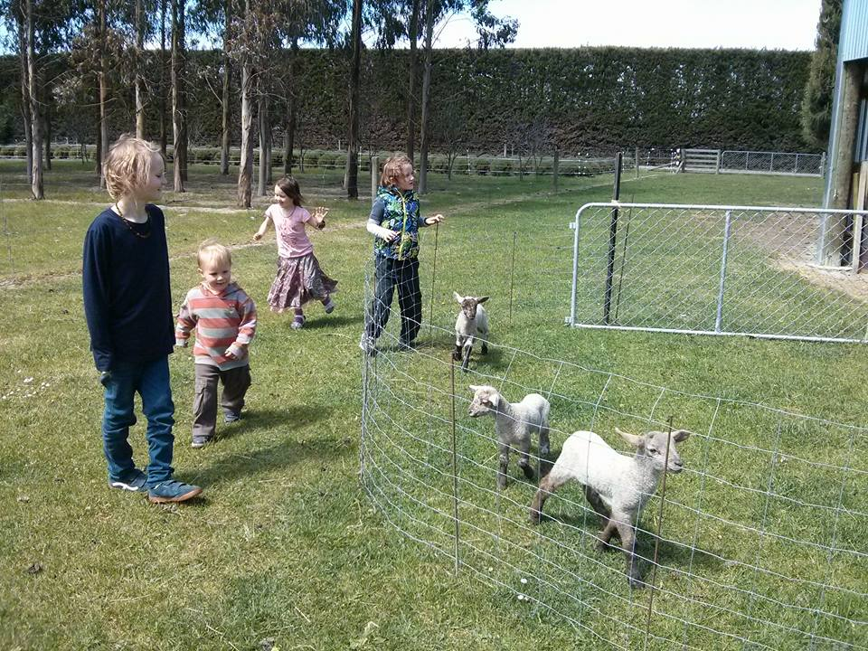 kids and goats darfield