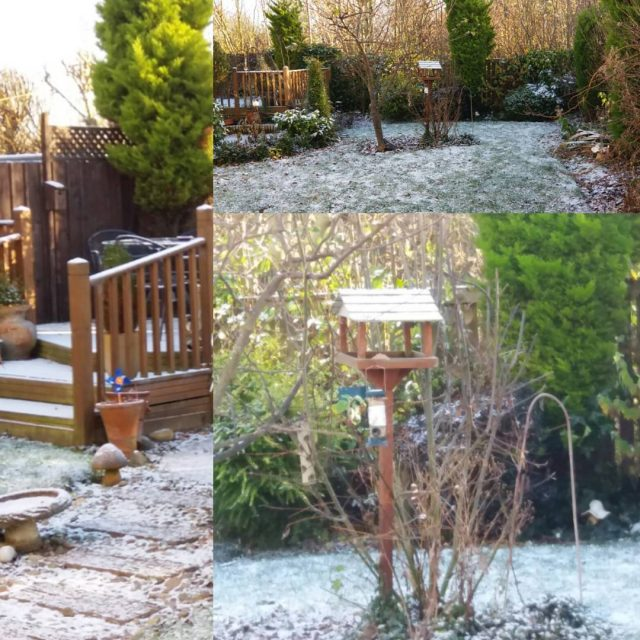 Garden looks a little bit magical this morning with ahellip